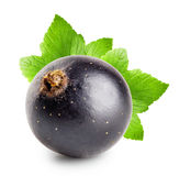 Black currant with leaf Royalty Free Stock Images