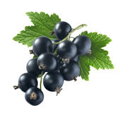Black currant 1 with leaf isolated on white background Stock Photos