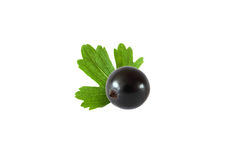 Black currant with leaf isolated on white background. With clipping path Stock Images