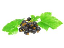 Black currant with leaf on white .Isolated. Royalty Free Stock Photos