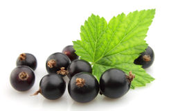 Black currant with leafs Royalty Free Stock Image