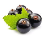 Black currant with leafs Royalty Free Stock Photos