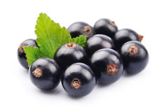 Black currant with leafs Stock Images