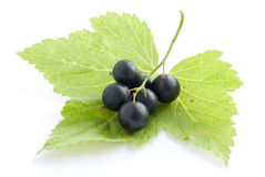 Black currant with leaves. Isolated on white Royalty Free Stock Photos