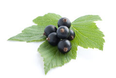 Black currant with leaves. Isolated on white stock image
