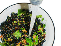 Black currant with leaves in a bowl under a water Stock Image