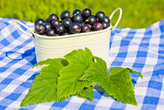 Black currant and leaves Stock Images