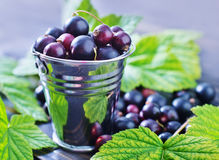 Black currant Royalty Free Stock Photos