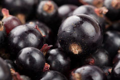 Black currant. Macro closeup shiny ripe Royalty Free Stock Photo