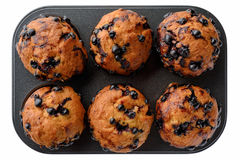 Black currant muffins Stock Photos