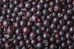 Black currant for mulled wine and hot tea Stock Photo