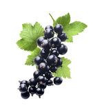Black currant new isolated on white background Royalty Free Stock Photos