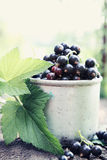 Black currant in an old  mug Stock Image