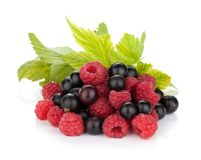 Black currant and raspberry Stock Images