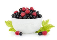 Black currant and raspberry in bowl Royalty Free Stock Images