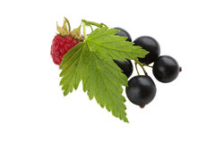 Black currant with raspberry Royalty Free Stock Photography