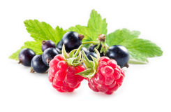 Black currant with raspberry with leaves isolated on white. Background Stock Photography