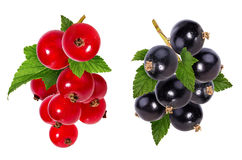 Black currant and red currant  isolated on white Royalty Free Stock Photo
