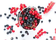 Black currant and red currant Stock Photo