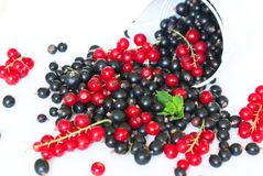 Black currant and red currant Royalty Free Stock Photography