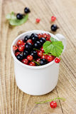 Black currant and red currant in a white cup Stock Photos