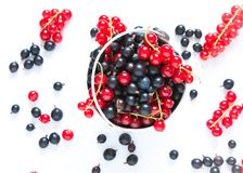 Black currant and red currants Stock Image