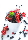 Black currant and red currants Royalty Free Stock Images