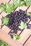 Black currant, ribes nigrum Royalty Free Stock Photo