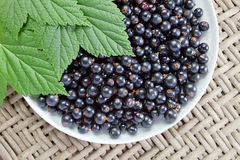 Black currant, ripe berries and green leaves Stock Photos