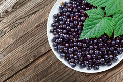 Black currant. Ripe berries and green leaves on  white plate Stock Photos