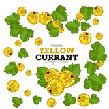 Black Currant Set, Vector. Royalty Free Stock Images