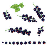 Black currant set Royalty Free Stock Photos