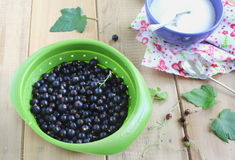 Black currant and sugar. Royalty Free Stock Image