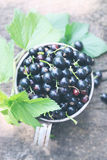 Black currant top view, tinted Royalty Free Stock Photo