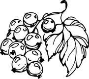 Black currant. Vector illustration Royalty Free Stock Photo