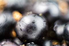 Black currant with water drops, blurred fruit background, macro shot Royalty Free Stock Photo