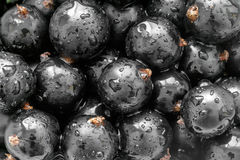 Black currant Stock Photography