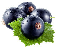 Black currant. Wet fruits Stock Photography
