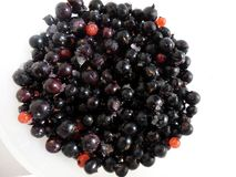Black currant on white Royalty Free Stock Photo