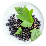 Black currant on a white background Royalty Free Stock Image