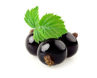 Black currant on a white. Royalty Free Stock Photography