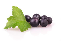 Black currant on a white background Royalty Free Stock Photography