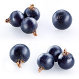 Black currant on white. Collection Stock Image