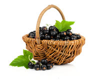Black currant in a wicker basket Royalty Free Stock Images