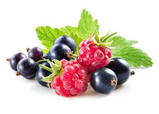 Free Black Currant With Raspberry Isolated On White Royalty Free Stock Photos - 76833258