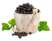 Black currant in a wooden bucket. On white background Royalty Free Stock Images