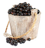 Black currant in a wooden bucket. On white background Stock Photos