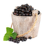 Black currant in a wooden bucket. On white background Royalty Free Stock Photos