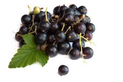Black currants. Isolated on white Royalty Free Stock Photo