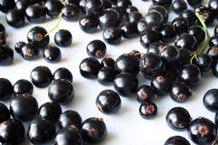 Black currants Royalty Free Stock Images